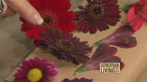 preserve flowers o shares ways to preserve your flowers