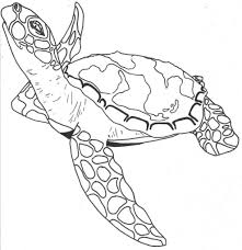simple sea turtle drawing coloring pages of sea turtles drawing