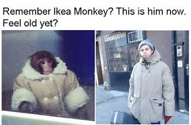 Ikea Monkey Meme - 40 feel old yet memes that ll plow right over your childhood nostalgia