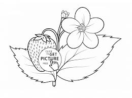 strawberry plant coloring page for kids fruits coloring pages