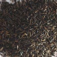 straight seeds sunflower etc nutbags garden bird foods