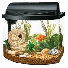 Goldfish In A Vase Aqueon Goldfish Mini Bow 5 Gallon Aquarium Starter Kit Desktop