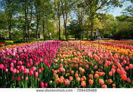 blooming stock images royalty free images u0026 vectors shutterstock