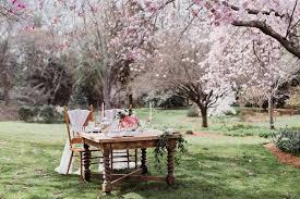 cherry blossom wedding a cherry blossom wedding southern california wedding photographer