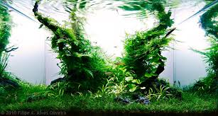 Aga Aquascaping Contest Manage Your Freshwater Aquarium Tropical Fishes And Plants Aga