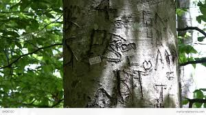 initials carved in tree tree initials carved thornton burgess green briar sandwich cape