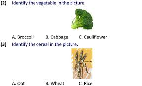 2 science uses of plants worksheets for students tutorials