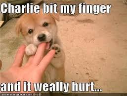 Orange Dog Meme - charlie bit my finger and it weally hurt i has a hotdog dog
