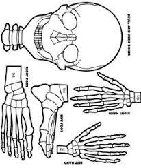pin by maria zacchigna on scienze pinterest human body