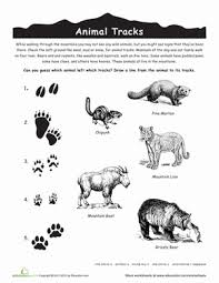 identify animal tracks worksheet education com