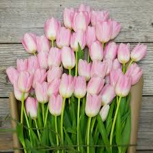 Tulip Bouquets Ballerina Light Pink Tulip Bouquet The Bouqs Co