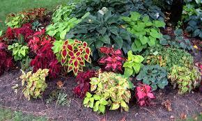 Shady Garden Ideas Pin By Carol On Plants Landscaping Design Pinterest
