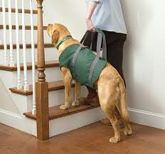 does your dog need a dog ramp or dog stairs