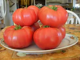 vegetable garden sun requirements instructions and tips for growing tomatoes in the organic