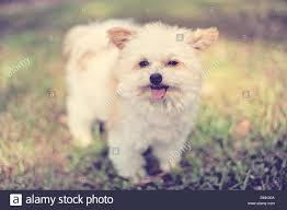 fluffy dog in backyard stock photo royalty free image 81554042