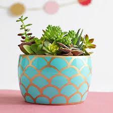 best house plants indoor winter plants our 8 best houseplants to grow now ugr