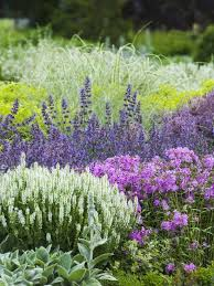 Plant Combination Ideas For Container Gardens - salvia dark pink phlox speedwell and lamb u0027s ear plant