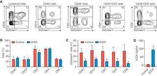 control of hiv infection in vivo using gene therapy with a