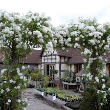 100 climbing plants with flowers high quality climbing