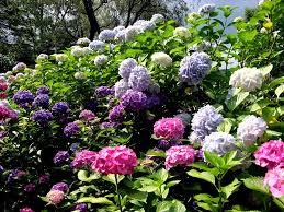 7 great flowers garden wallpapers podniebnyblog