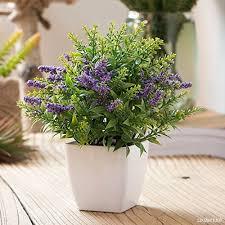 plante bureau nabotht émulation fleur lavande plante en pot green sik intérieur