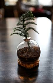 attractive inspiration ideas real mini tree astonishing