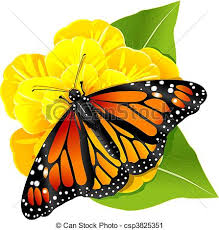 monarch butterfly on the flower monarch butterflies on the