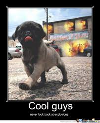 Cool Dog Meme - dat cool dog by ussbuttfucker meme center