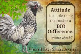 quotes about sudden death of a friend rooster quotes u0026 sayings animal quotes u0026 sayings
