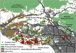 Griffith Park Map Los Angeles Mountain Lions Are Hunting Closer To Homes Than