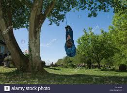 boy playing on tree swing in backyard stock photo royalty free