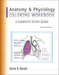 Human Anatomy And Physiology Marieb 7th Edition Study Guide For Anatomy And Physiology Coloring Workbook A
