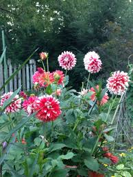 top fall flowers and berries and leaf color for your garden