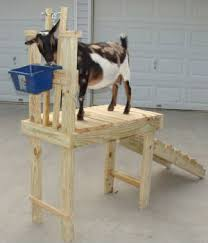Milking Tables Goat Milk Stands And Playgrounds