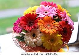 gerbera bouquet gerbera bouquet stock photo 480984208