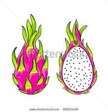 editable fruit vector fruit isolated editable objects stock vector