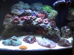 stunner led aquarium light strips coralife biocube 29 stock lighting reef2reef saltwater and reef