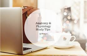 What Is Anatomy And Physiology Class Anatomy U0026 Physiology Study Tips Ap The Pa