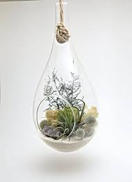 Shabby Chic Purple by Bliss Gardens Teardrop Air Plant Terrarium With Purple Amethyst
