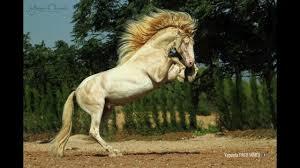 ferrari horse andalusian horse for sale duc ferrari presentation youtube