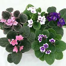 25 Easy Houseplants Easy To by 23 Low Light Houseplants That Are Easy To Maintain Even If You U0027re Busy
