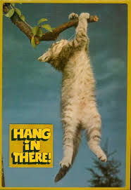 Hang In There Meme - the inaugural edition of meme monday things that start with j