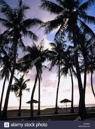 micro beach coconut palm tree evening view saipan sky clouds tree