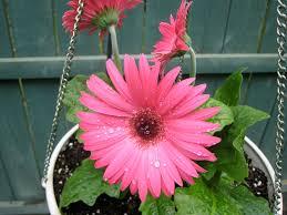 the balcony garden u2013 5 great ways to grow a balcony garden u2013 flowerups