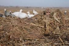 Goose Layout Blind Avery Killer Weed Layout Blind Kit All Terrain 2 Pk Ebay