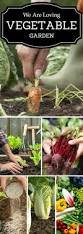 Natural Pesticides For Vegetable Gardens by We Are Loving Vegetable Gardening Let U0027s Start Planting Your First