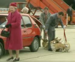 pembroke welsh corgi archives national purebred dog day