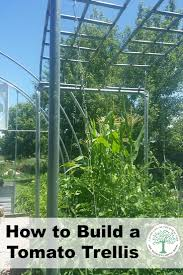 how to build a tomato trellis