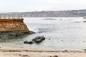 how to visit the la jolla seals and sea lions la jolla mom
