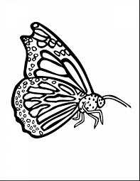 magnificent blue morpho butterfly coloring page with butterfly